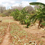 Planting food